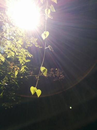 Feuille et rayon de soleil